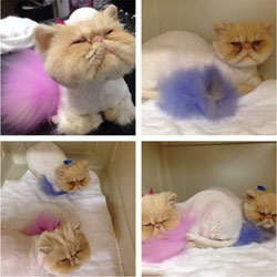 Cat Grooming Articles