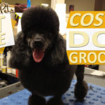 The Cost of Dog Grooming - Average Pricing and Services Estimates