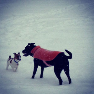 Outdoor Winter Dogs