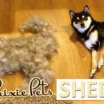 How to Make your Dog ShedLESS!