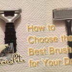 What Type of Brush To Use for Your Dog