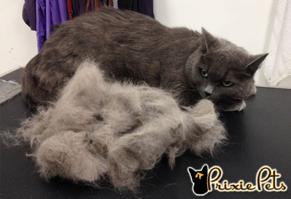 Remove Dead Fur from your cat