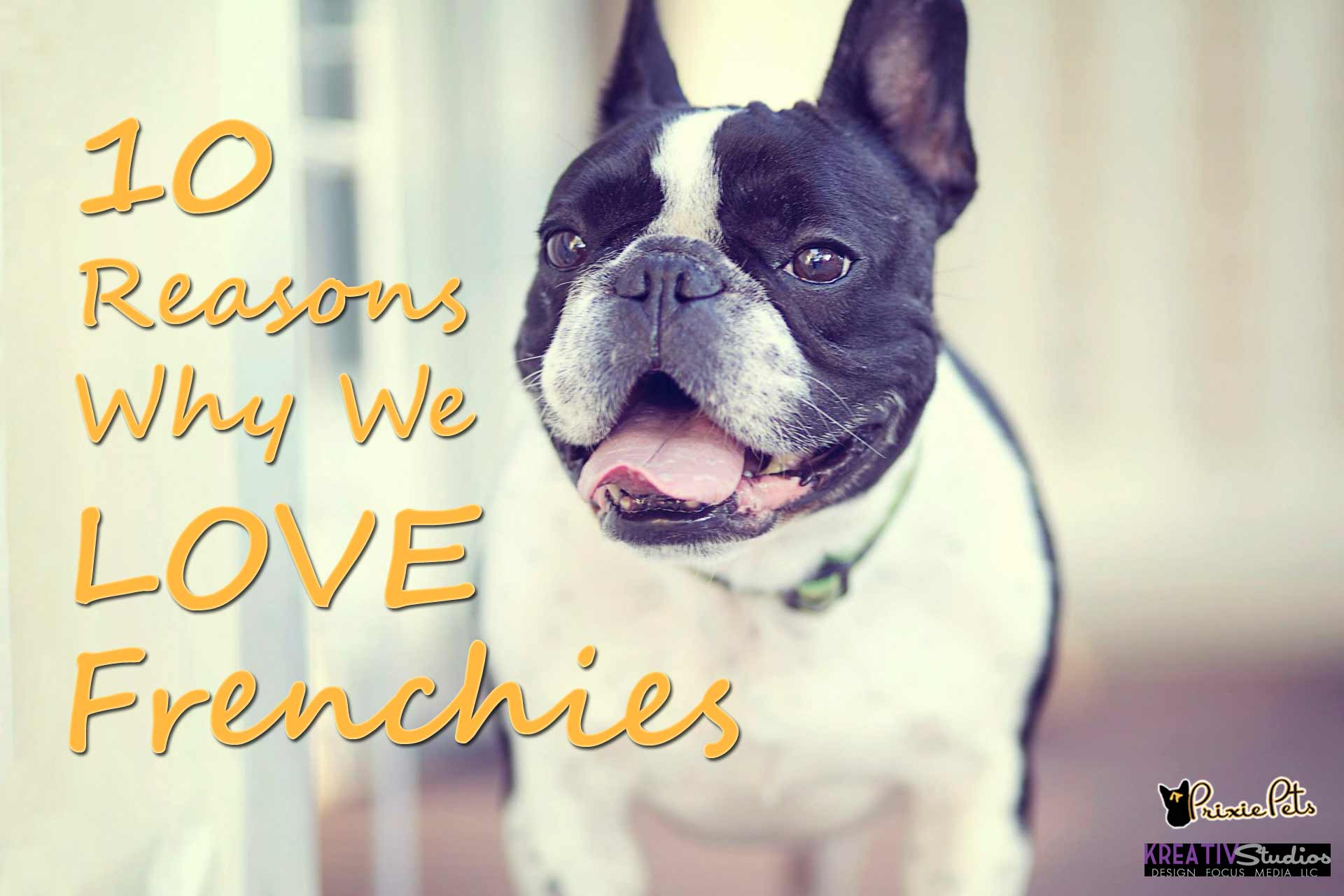 10 Reasons We Love Frenchies