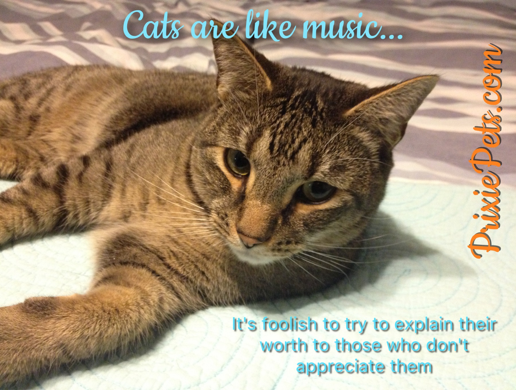 the cutest cat quotes i have ever seen cute cat memes