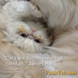 Our Favorite Cat Quotes!