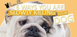 Six Ways You Are Slowly Killing Your Dog