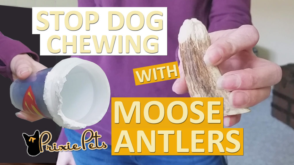 Moose Antlers Deter Dog Chewing