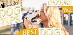 Choosing the Best Dog for You!