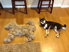 Dog Made Out of Fur