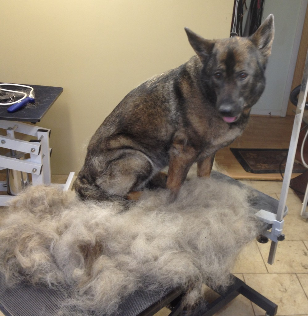 Removing Excess Dog Hair