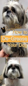 De-Grease Dog's Coat