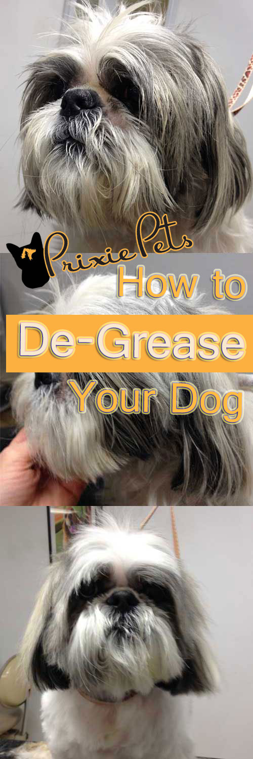 De-Grease Dog's Coat