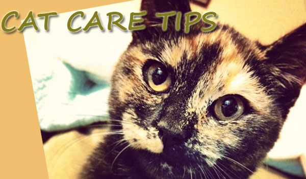 Cat Care Articles