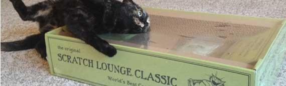 Cat Scratch Box Review