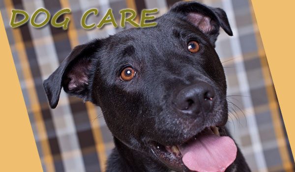 Best Dog Care Articles