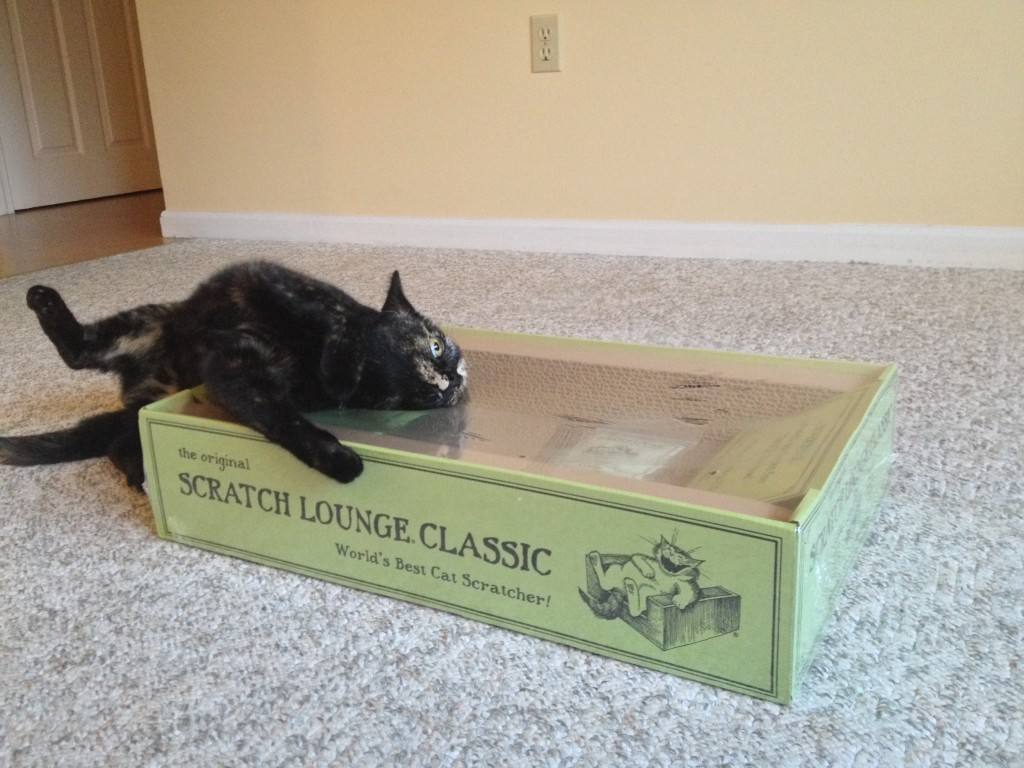 Cats Love Scratch Lounge