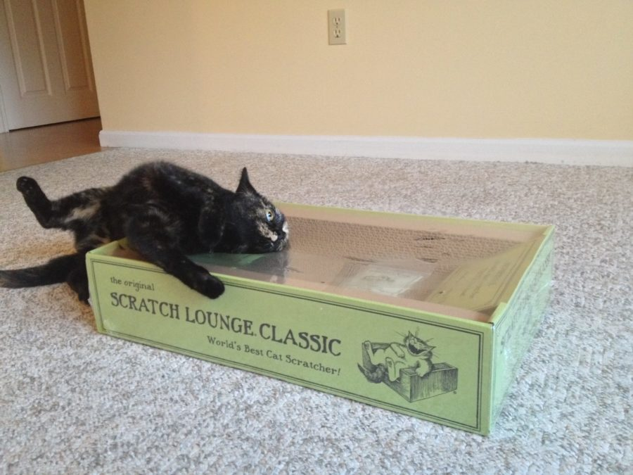 Cat Lounge Review