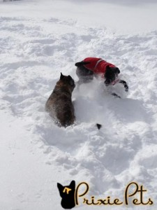 Dogs Playing in Winter
