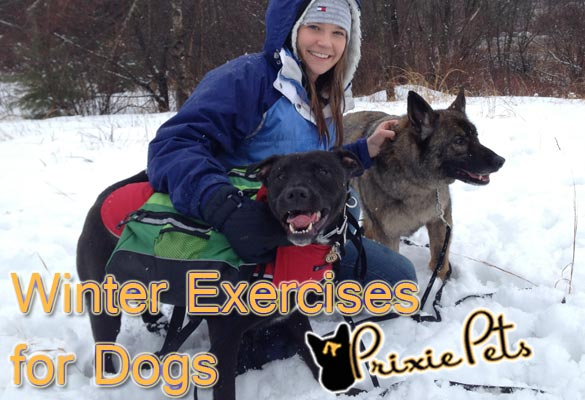Winter Dog Exercise