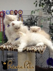 Unmatted Cats with Beautiful Fure - Cute