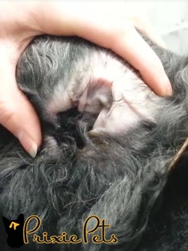 Plucking Dog Ears