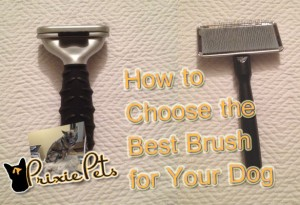 How To Choose the Best Dog Brush