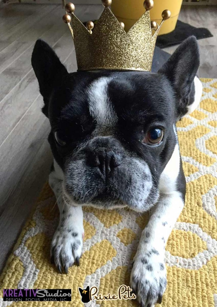 King Frenchie Personality