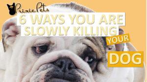 Slowly Killing Your Dog