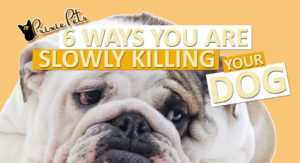 Are You Slowly Killing Your Dog