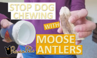 Deter your Dog from Chewing with Moose Antlers