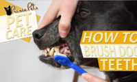 Tips for Brushing your Dog's Teeth