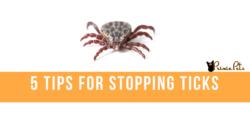 Five Tips for Stopping Ticks