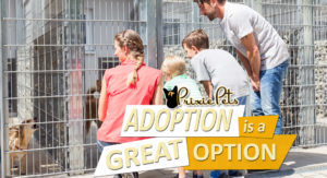 Adoption is a Great Option