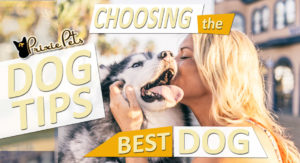 How-to-Choose-Best-Dog