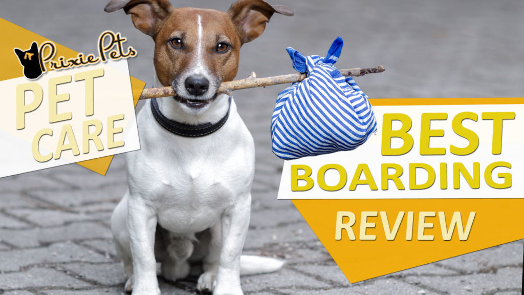 Best Pet Boarding Care