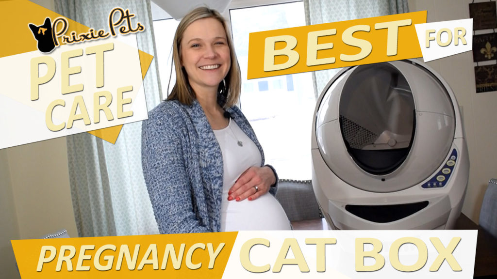 Safe Cat Box for Pregnancy