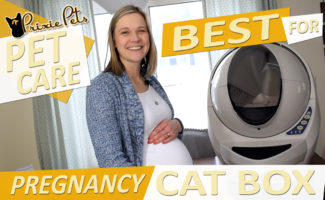 The Best Cat Litter Box for Pregnant Women
