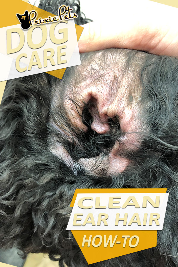 How to Clean/Remove Dog Ear Hair