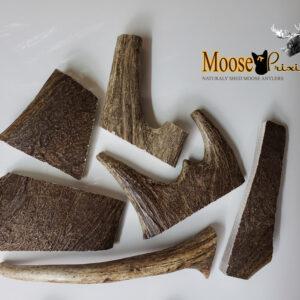 Moose Antler Dog Chews