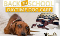 Back To School Dog Daytime Care