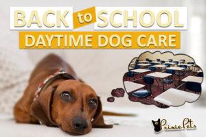 Dog Care Durring School