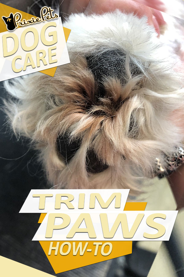 How to Trim Dog Paw Pads