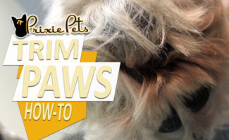 How to and benefits of Shaving Dog Paw Pads