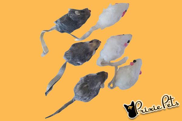 Play Cat Mouse Toys