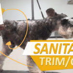 Stop Pee/Poop Sticking to Dog Hair with a Sanitary Trim