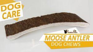 Moose Antler Dog Chew Toy