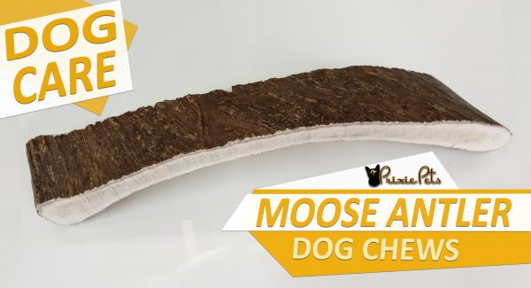 Moose Antler Dog Chew Toy